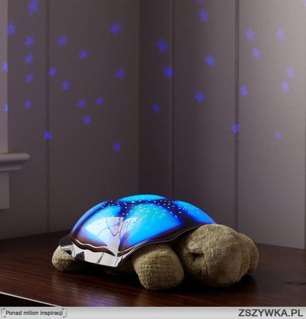 turtle projecting